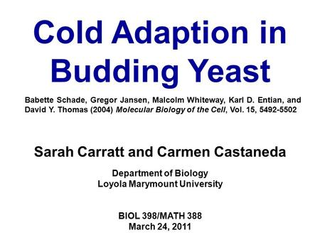 Sarah Carratt and Carmen Castaneda Department of Biology Loyola Marymount University BIOL 398/MATH 388 March 24, 2011 Cold Adaption in Budding Yeast Babette.