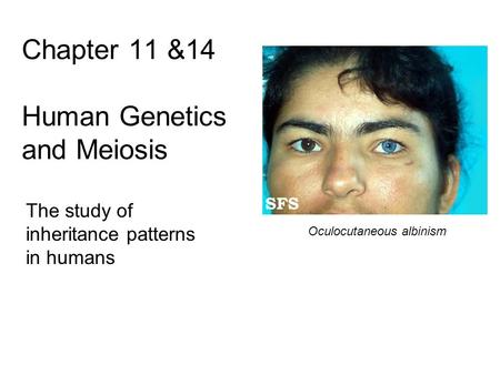Chapter 11 &14 Human Genetics and Meiosis