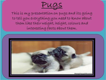 Pugs This is my presentation on pugs and its going to tell you everything you need to know about them like their weight, height, colours and interesting.