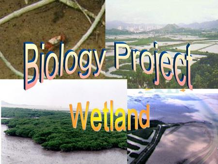 The term 'wetland', covers many inland, coastal and marine habitats, which share common features. They are places where land meets water, supporting specially.