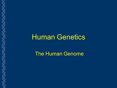 Human Genetics The Human Genome. Genome  The genome of an organism is the complete set of genes specifying how its phenotype will develop (under a certain.