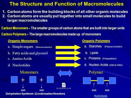 Carbon Monomers – The smaller groups of carbon atoms that are built into larger units Carbon Polymers – The large macromolecules made up of monomers ++