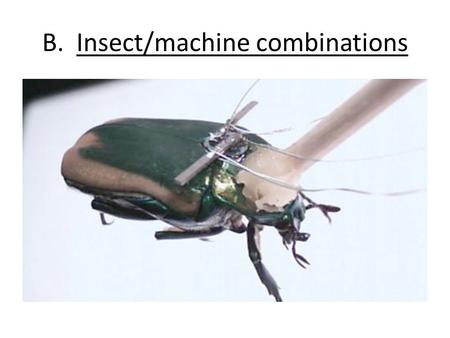 B. Insect/machine combinations. C. Synthetic Transplants.