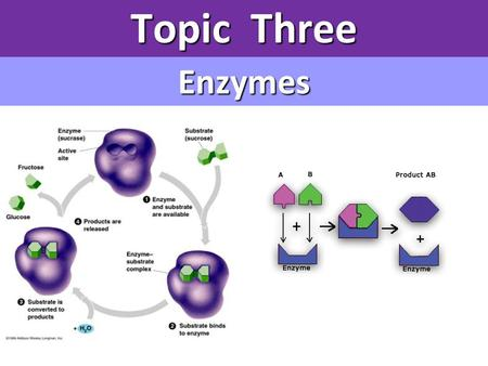 Topic Three Enzymes.