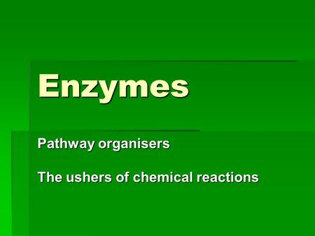 Enzymes Pathway organisers The ushers of chemical reactions.