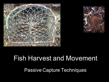Passive Capture Techniques Fish Harvest and Movement.