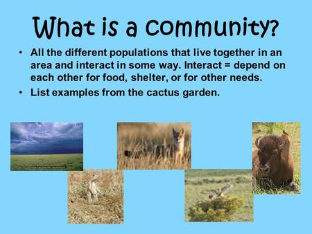 What is a community? All the different populations that live together in an area and interact in some way. Interact = depend on each other for food, shelter,