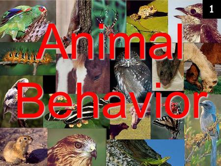 Animal Behavior 1. Behavior – anything an organism does in response to a stimulus in its environment.  Behaviors develop through interactions between.