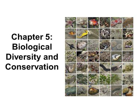 Chapter 5: Biological Diversity and Conservation.