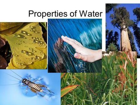 Properties of Water. Water: 2 atoms of hydrogen, one of oxygen Held together by strong, covalent bond - electrons are 'shared' Water molecules interact.
