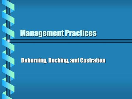 Management Practices Dehorning, Docking, and Castration.