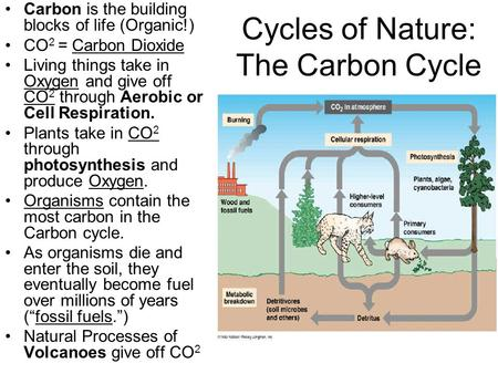 Cycles of Nature: The Carbon Cycle Carbon is the building blocks of life (Organic!) CO 2 = Carbon Dioxide Living things take in Oxygen and give off CO.
