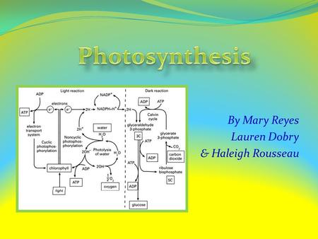 By Mary Reyes Lauren Dobry & Haleigh Rousseau Basic Information Photosynthesis involves the conversion of : light energy chemical energy Light from the.