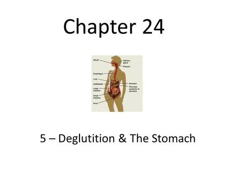 5 – Deglutition & The Stomach