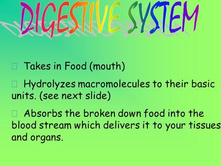 ð Takes in Food (mouth) ð Hydrolyzes macromolecules to their basic units. (see next slide) ð Absorbs the broken down food into the blood stream which.