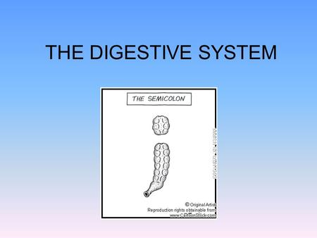 THE DIGESTIVE SYSTEM. as heterotrophs we need to take in our food from the outside once inside the cell, the nutrients are used as scaffolding for synthesis.
