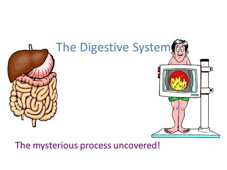 The Digestive System The mysterious process uncovered!