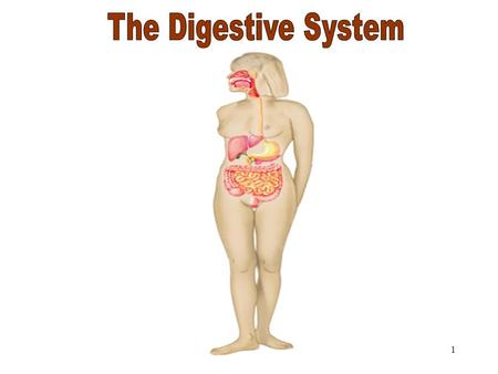 1 The Digestive System. 6.1.1 Why digest food? Food consists of: –Carbohydrates –Lipids –Proteins –Nucleic acids –Minerals –Vitamins –Water These are.