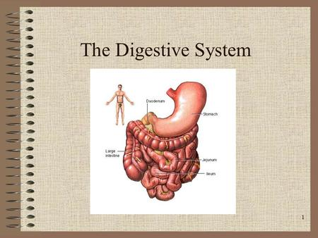 1 The Digestive System. 2 Major Functions Digestion- Break down food into the nutrients the body can absorb. Absorption- Take out nutrients out of the.