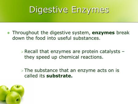 Digestive Enzymes Throughout the digestive system, enzymes break down the food into useful substances.  Recall that enzymes are protein catalysts – they.