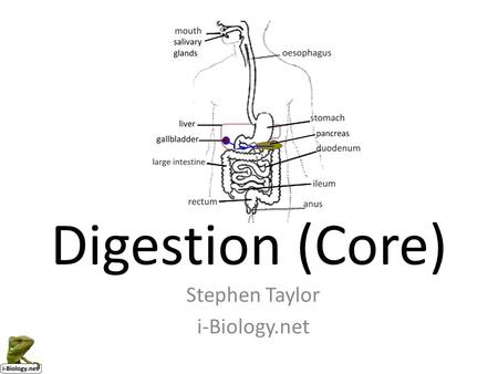 Digestion (Core) Stephen Taylor i-Biology.net.