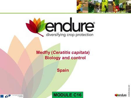 © ENDURE, February 2007 FOOD QUALITY AND SAFETY © ENDURE, February 2007 FOOD QUALITY AND SAFETY Medfly (Ceratitis capitata) Biology and control Spain MODULE.