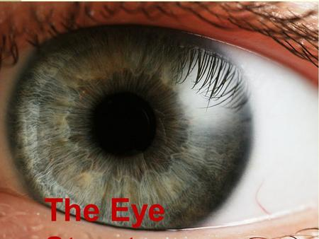 The Eye Structure. External Parts of the Eye (Tear Duct)