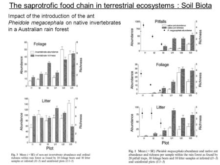 The saprotrofic food chain in terrestrial ecosystems : Soil Biota
