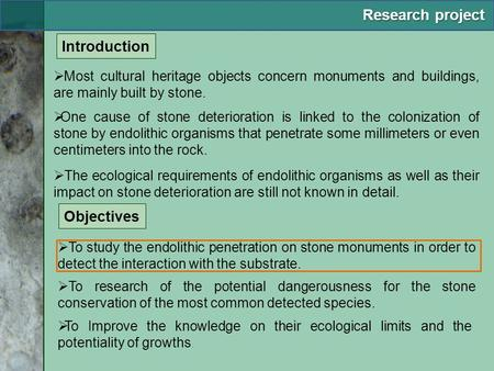  Most cultural heritage objects concern monuments and buildings, are mainly built by stone.  The ecological requirements of endolithic organisms as well.