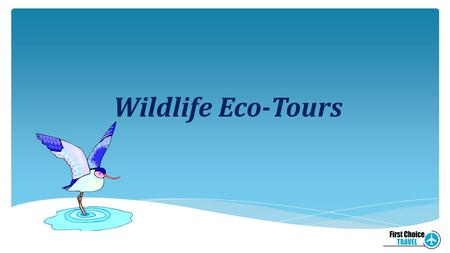 Wildlife Eco-Tours. Definition of Eco-Tour An eco-tour is a trip that is culturally and biologically diverse, causes minimal impact and damage to the.