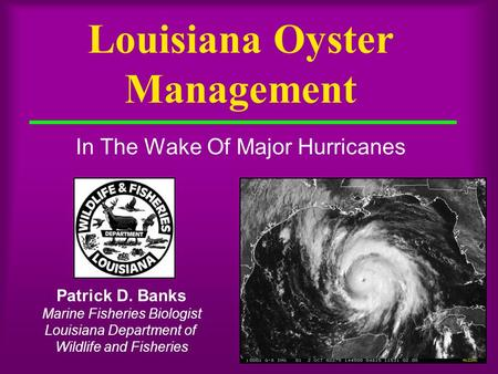 Louisiana Oyster Management In The Wake Of Major Hurricanes Patrick D. Banks Marine Fisheries Biologist Louisiana Department of Wildlife and Fisheries.