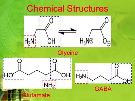 Chemical Structures Glycine Glutamate GABA. Neurotransmitters ExcitatoryInhibitory Process that controls Depolarization of cell membrane Hyperpolarization.