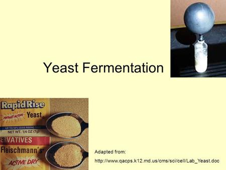 Yeast Fermentation Adapted from: