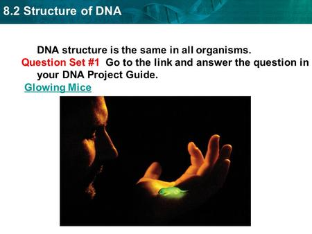 DNA structure is the same in all organisms.