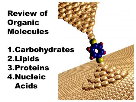 Review of Organic Molecules 1.Carbohydrates 2.Lipids 3.Proteins 4.Nucleic Acids.