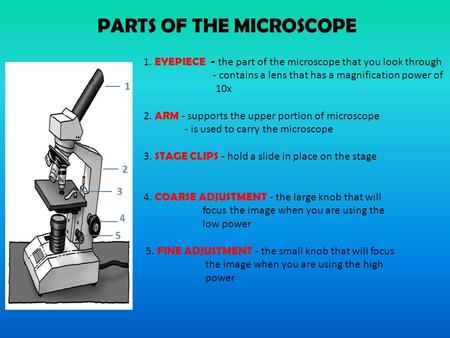 PARTS OF THE MICROSCOPE 1. EYEPIECE - the part of the microscope that you look through - contains a lens that has a magnification power of 10x 2. ARM -