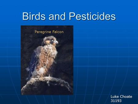 Birds and Pesticides Luke Choate 31193 Peregrine Falcon.