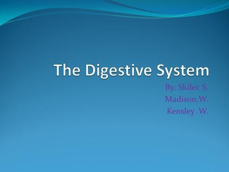 By: Skiler. S. Madison.W. Kensley.W.. Digestive Diagram.