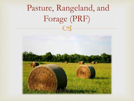  Pasture, Rangeland, and Forage (PRF).  Why should I insure my pasture & hayland?  Good Risk Management  Keep plans on track (maintain herd size)