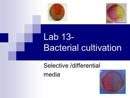 Lab 13- Bacterial cultivation