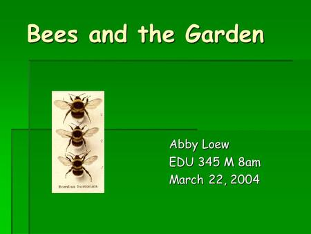 Bees and the Garden Abby Loew EDU 345 M 8am March 22, 2004.