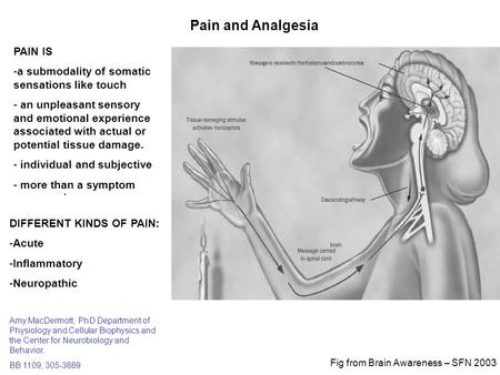 Pain and Analgesia PAIN IS