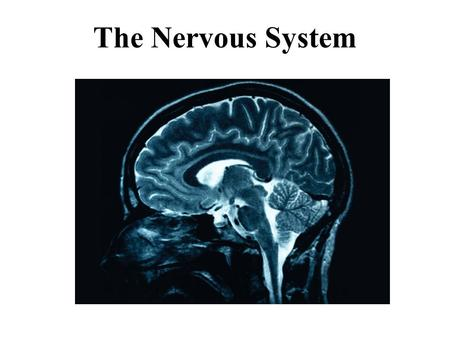 The Nervous System. Gathers information both externally and internally Transmits this information for processing Processes the information to determine.
