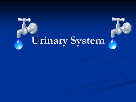 Urinary System. Body System Vocab Homeostasis- A state of balance in the body Homeostasis- A state of balance in the body (everything is A ok) Metabolism-