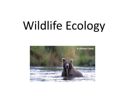 Wildlife Ecology. What is Wildlife Ecology? Wildlife ecology is a field that studies animals, especially animal populations, and seeks to identify ways.