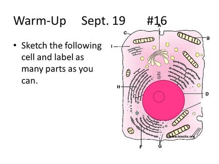 Warm-Up Sept. 19 #16 Sketch the following cell and label as many parts as you can.