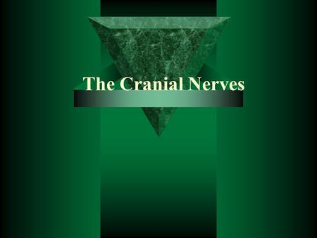 The Cranial Nerves.