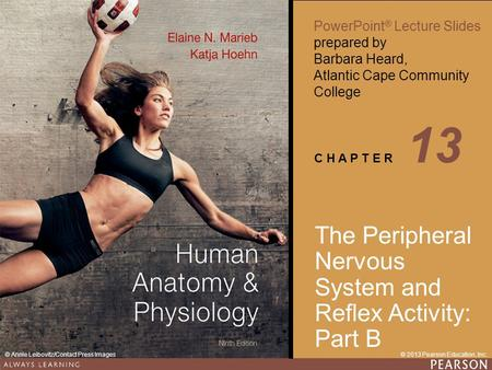13 The Peripheral Nervous System and Reflex Activity: Part B.