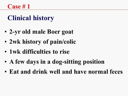 Case # 1 Clinical history 2-yr old male Boer goat 2wk history of pain/colic 1wk difficulties to rise A few days in a dog-sitting position Eat and drink.