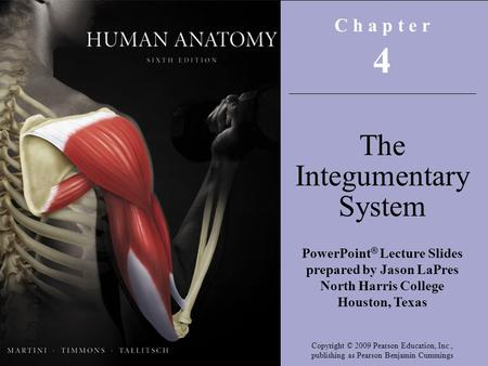 C h a p t e r 4 The Integumentary System PowerPoint ® Lecture Slides prepared by Jason LaPres North Harris College Houston, Texas Copyright © 2009 Pearson.